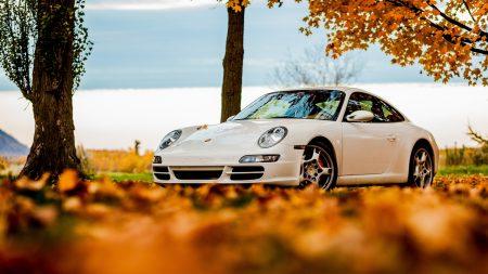 trees, autumn, 911