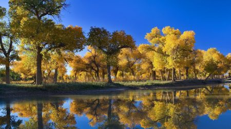 trees, autumn, reflection