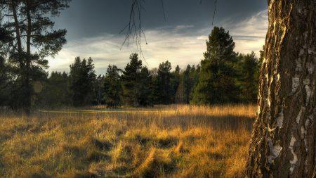 trees, grass, bark