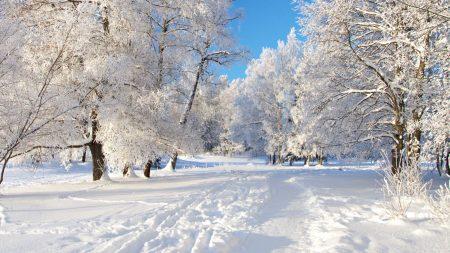 trees, hoarfrost, snow