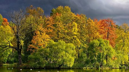 trees, lake, autumn