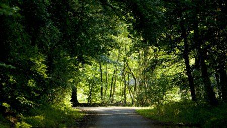 trees, wood, greens