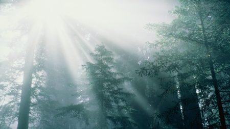 trees, wood, sun