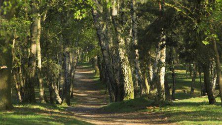trees, wood, trunks