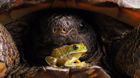 turtle, frog, face