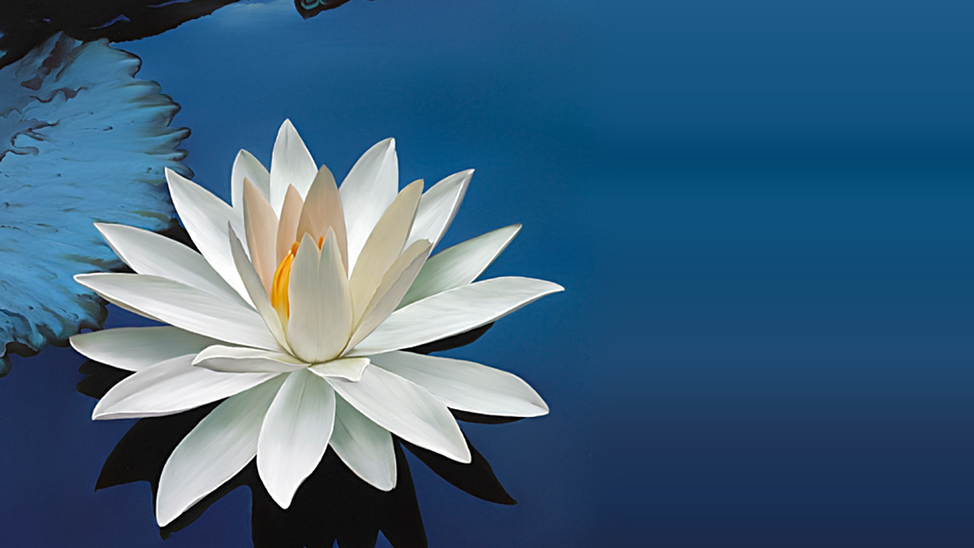 Get The Latest Water Lily Flower Leaf News Pictures And Videos Learn All About From Wallpapers4u Org Your Wallpaper