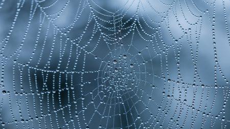 web, drops, wet