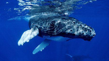 whale, water, ocean