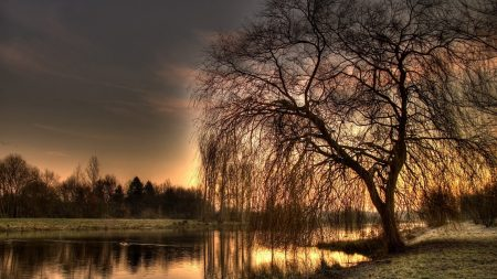 willow, autumn, lake