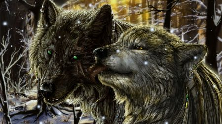 wolves, pair, tenderness
