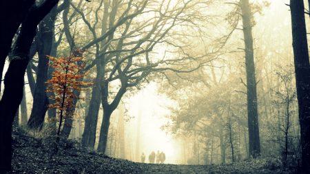 wood, fog, tree
