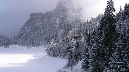 wood, mountains, fog