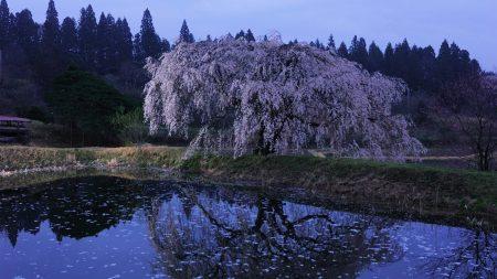 wood, river, flowers