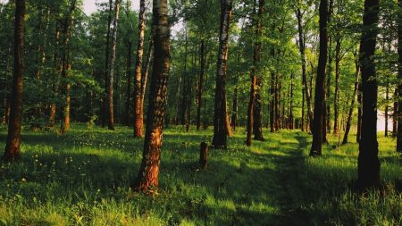 wood, track, path