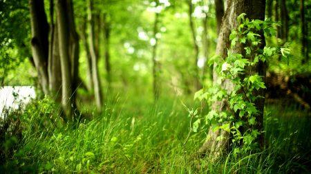 wood, tree, leaves
