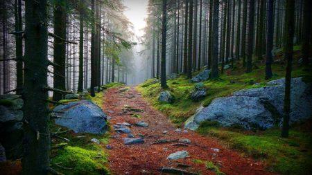 wood, trees, path