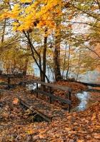 autumn, bridges, trees
