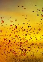autumn, girl, leaves