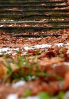 autumn, steps, foliage