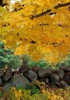 autumn, trees, stones