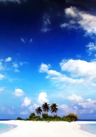 beach, palm trees, sand
