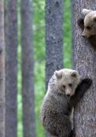 bear, couple, bear cubs