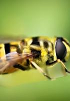 bee, green, blur