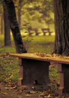 bench, park, leaves