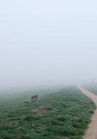 bench, track, fog