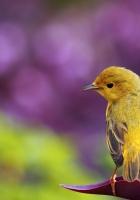 bird, color, grass