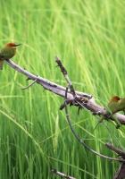birds, color, branch