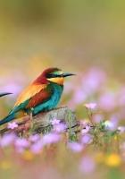birds, field, grass
