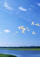 birds, white, flight