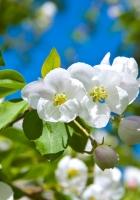 blossom, spring, sunny