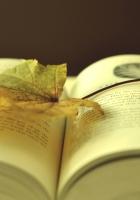 book, leaf, autumn