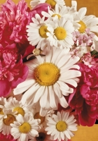 bouquet, camomiles, peonies
