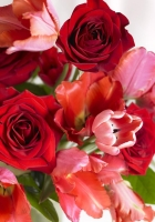 bouquet, red, pink