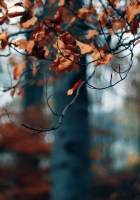 branch, autumn, leaves