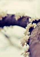 branch, flowers, moss