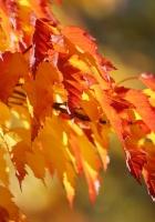 branch, grading, leaves