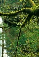 branch, tree, moss