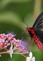 butterflies, flowers, branches
