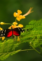 butterfly, grass, color