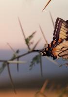 butterfly, tree, branch