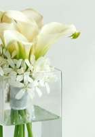 calla lilies, flowers, white