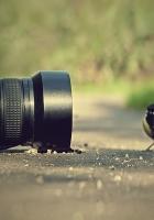 camera, sparrow, bird