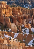 canyons, snow, trees