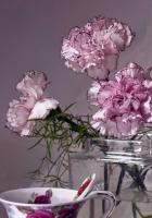 carnations, flowers, tea pair