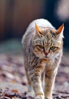 cat, autumn, skinny