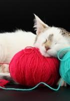 cat, ball, thread